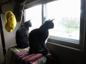 Our two cats looking out of the window when we were evacuated.